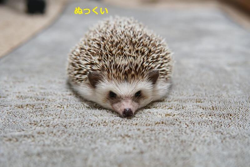 f:id:chikojirou:20160728212123j:plain