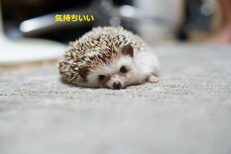f:id:chikojirou:20160728212129j:plain