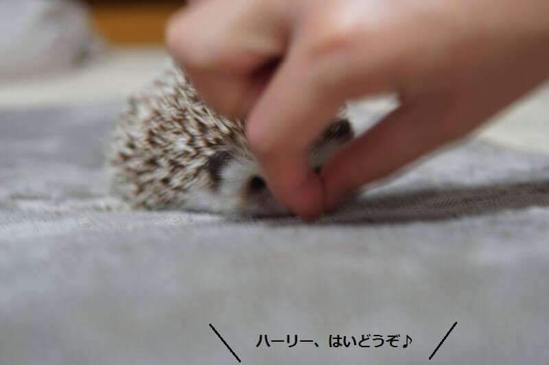 f:id:chikojirou:20160801213719j:plain