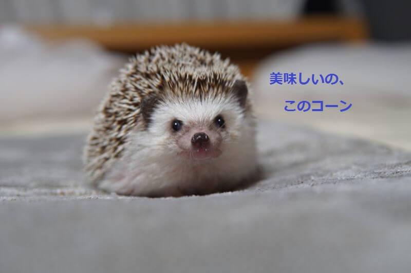 f:id:chikojirou:20160801213759j:plain
