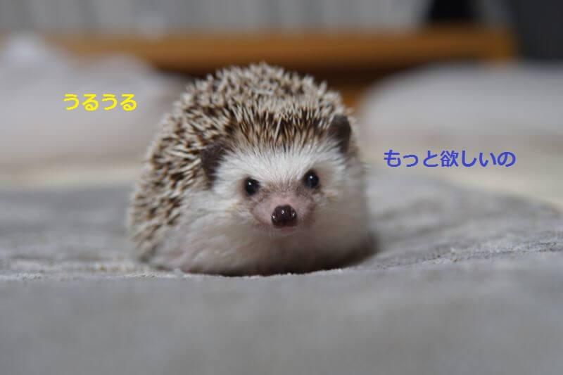 f:id:chikojirou:20160801213811j:plain