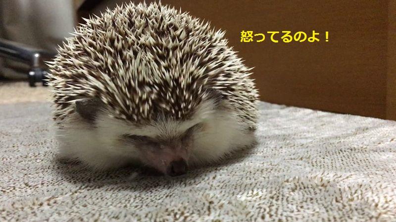 f:id:chikojirou:20160814135139j:plain