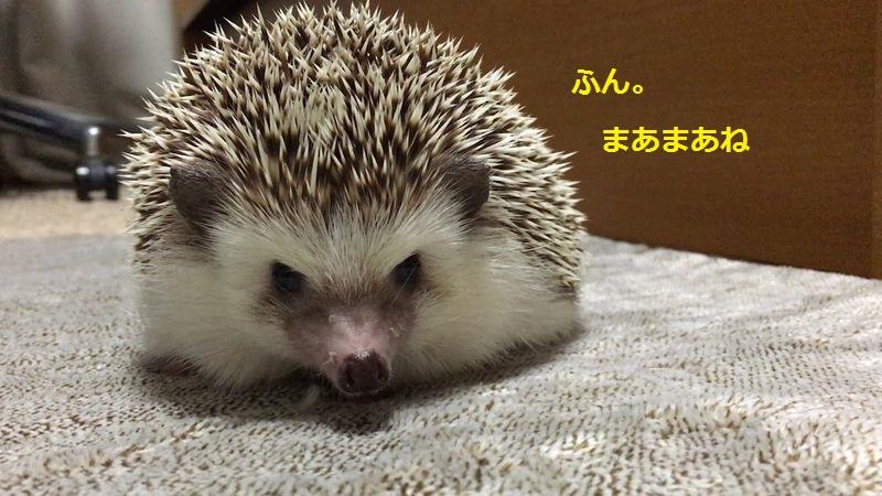 f:id:chikojirou:20160814135153j:plain