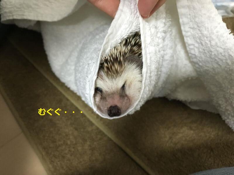 f:id:chikojirou:20160815213433j:plain