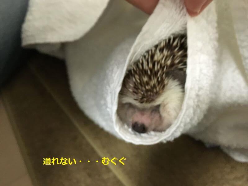 f:id:chikojirou:20160815213444j:plain
