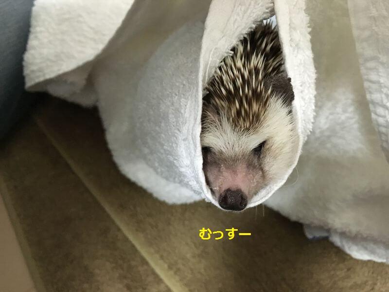 f:id:chikojirou:20160815213451j:plain