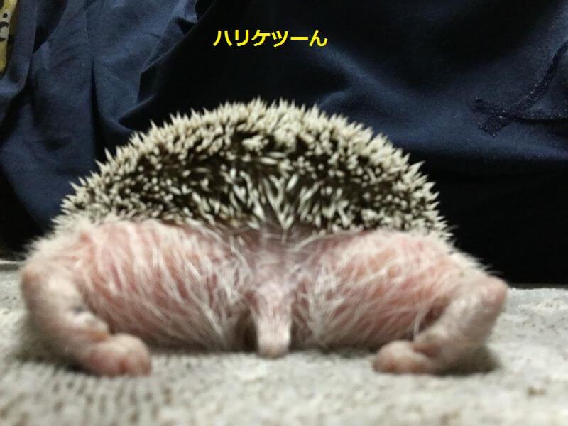 f:id:chikojirou:20160817214031j:plain