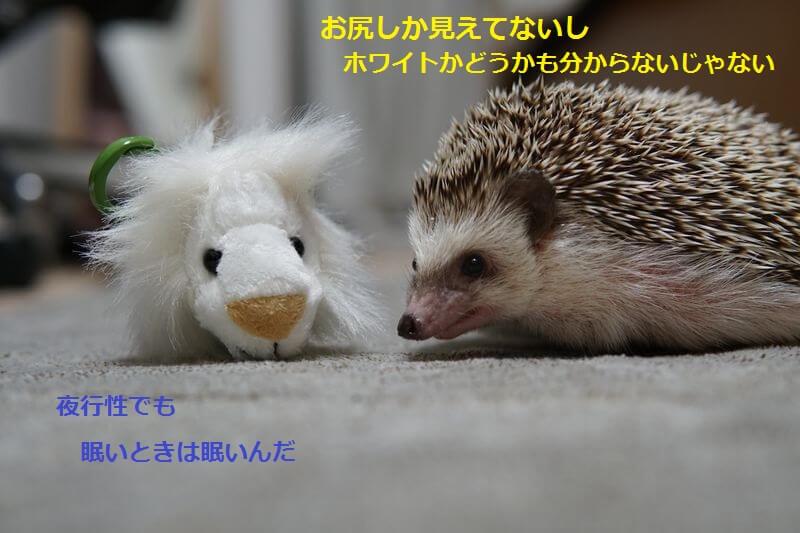 f:id:chikojirou:20160821114242j:plain