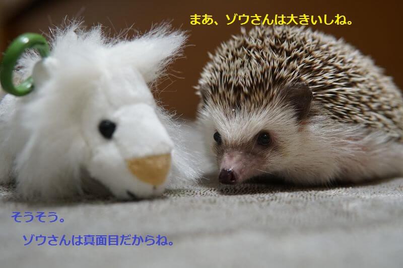 f:id:chikojirou:20160821114305j:plain