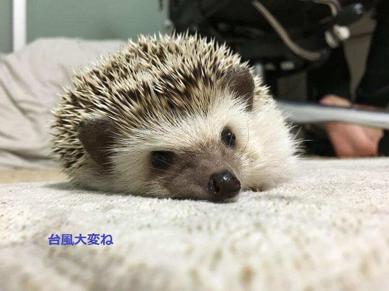 f:id:chikojirou:20160822172605j:plain