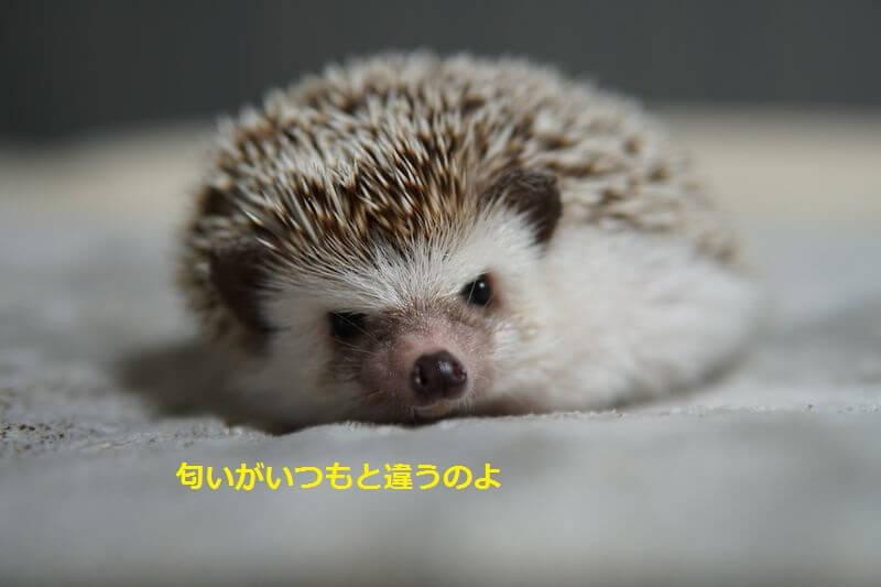 f:id:chikojirou:20160822205148j:plain