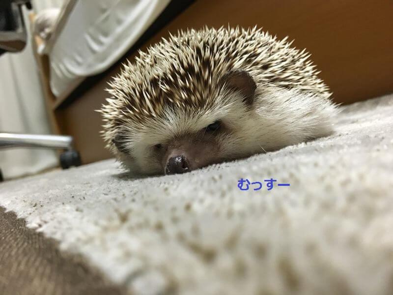f:id:chikojirou:20160823225256j:plain