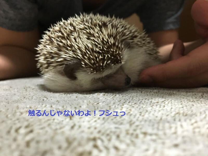f:id:chikojirou:20160823225308j:plain