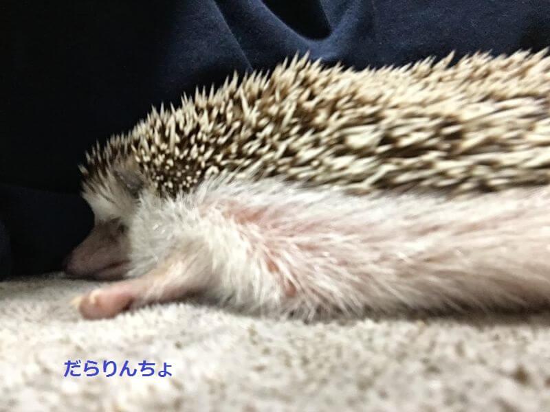 f:id:chikojirou:20160823225319j:plain