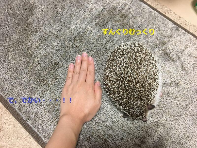 f:id:chikojirou:20160825214940j:plain
