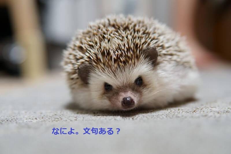 f:id:chikojirou:20160825214947j:plain