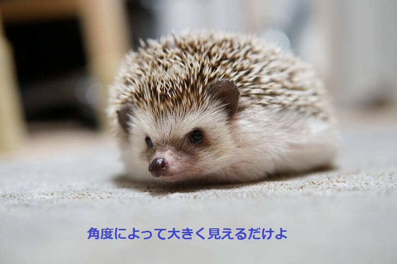 f:id:chikojirou:20160825214952j:plain