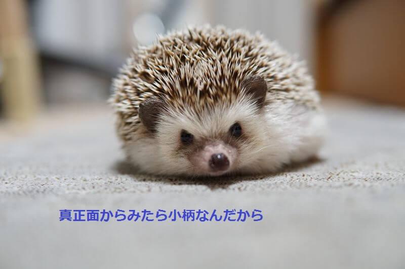 f:id:chikojirou:20160825215005j:plain