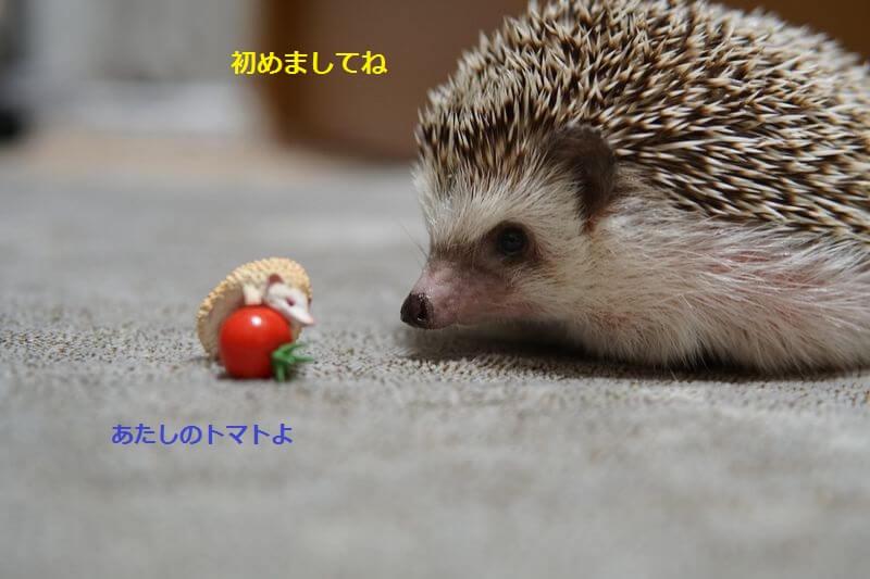 f:id:chikojirou:20160829212614j:plain