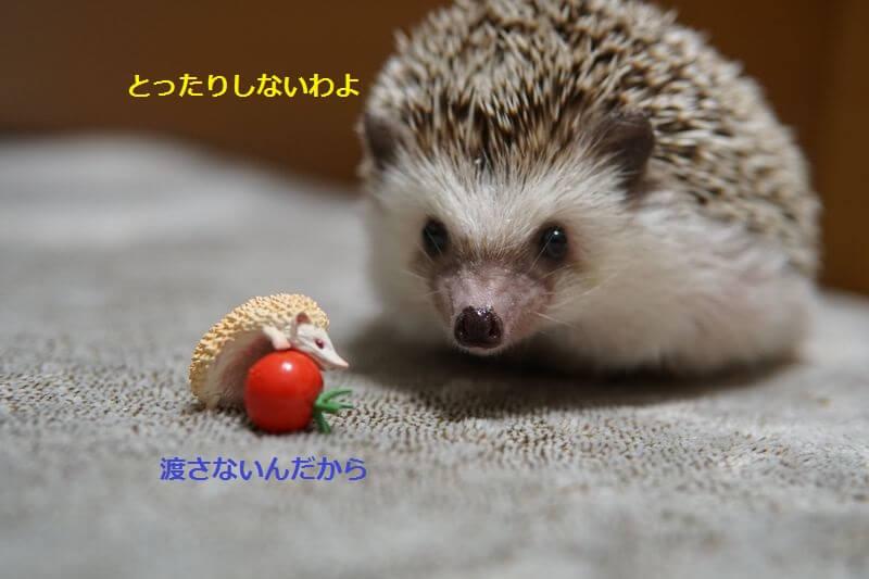 f:id:chikojirou:20160829212619j:plain