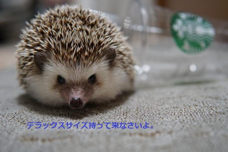 f:id:chikojirou:20160831213755j:plain