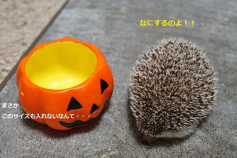 f:id:chikojirou:20160905211153j:plain