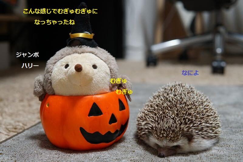 f:id:chikojirou:20160905211204j:plain
