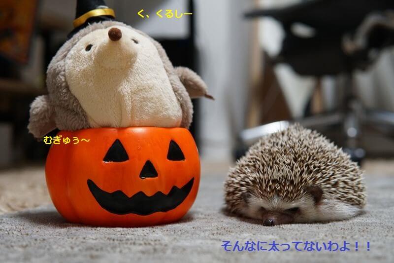 f:id:chikojirou:20160905211210j:plain