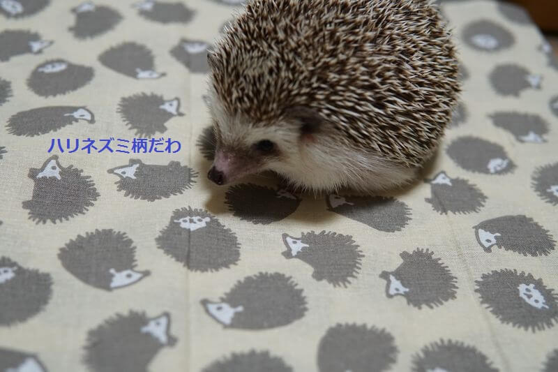 f:id:chikojirou:20160906212002j:plain