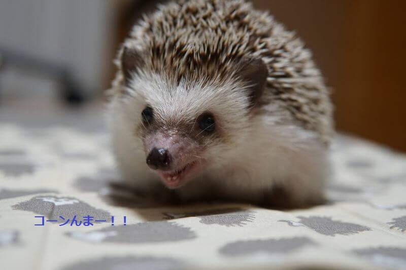 f:id:chikojirou:20160906212008j:plain