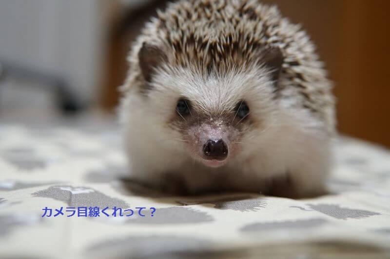 f:id:chikojirou:20160906212014j:plain