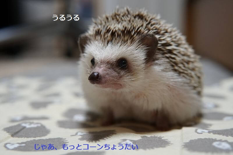 f:id:chikojirou:20160906212020j:plain