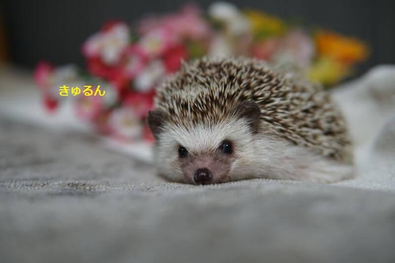 f:id:chikojirou:20160908212349j:plain