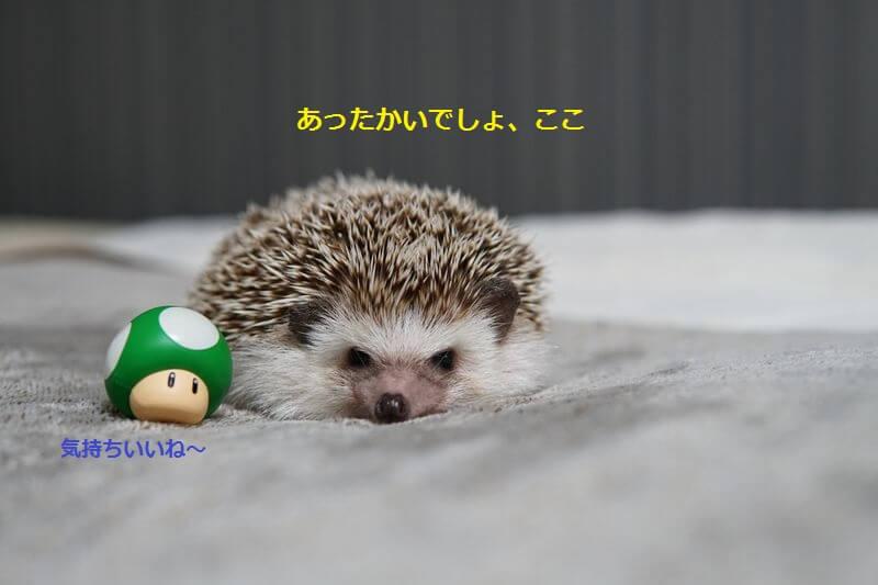 f:id:chikojirou:20160910201848j:plain