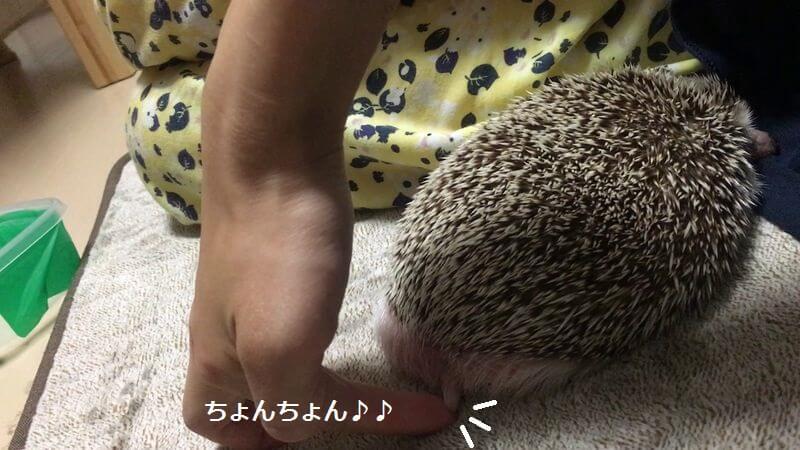 f:id:chikojirou:20160913212745j:plain