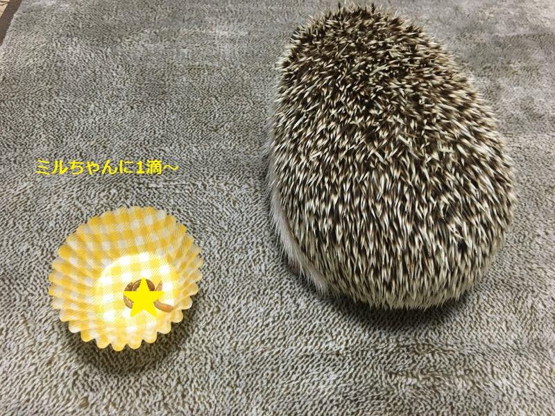 f:id:chikojirou:20160922203737j:plain