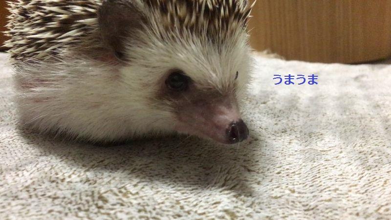 f:id:chikojirou:20160922203752j:plain