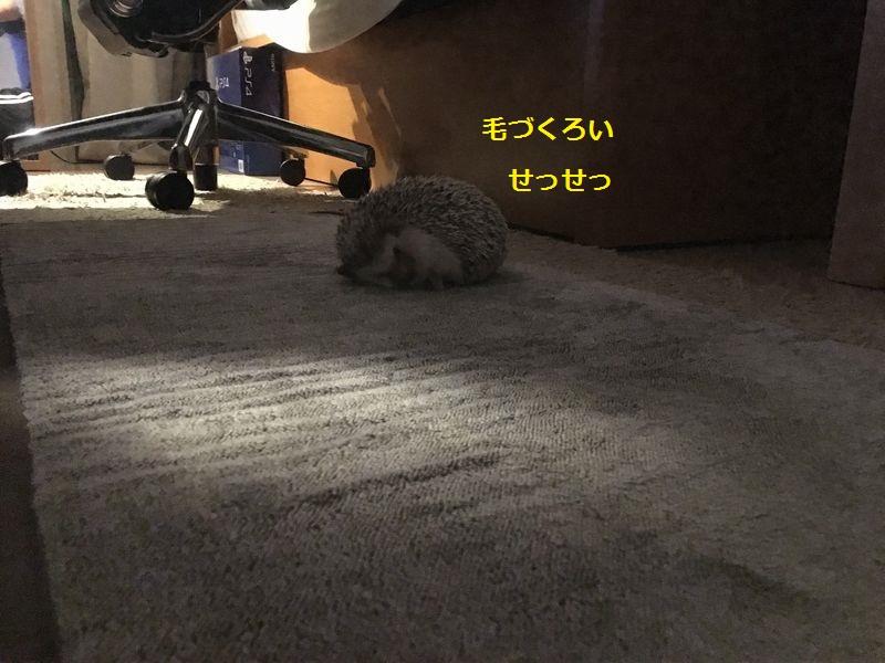 f:id:chikojirou:20160923212504j:plain