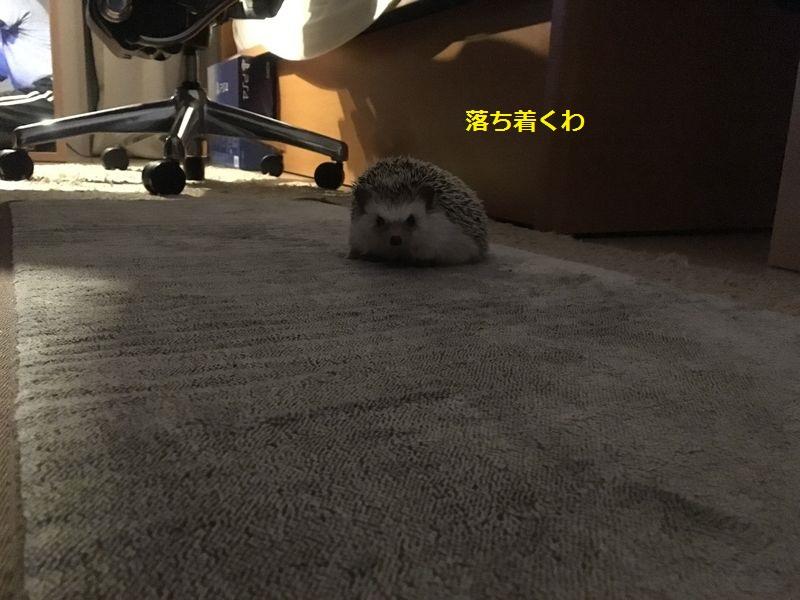 f:id:chikojirou:20160923212511j:plain