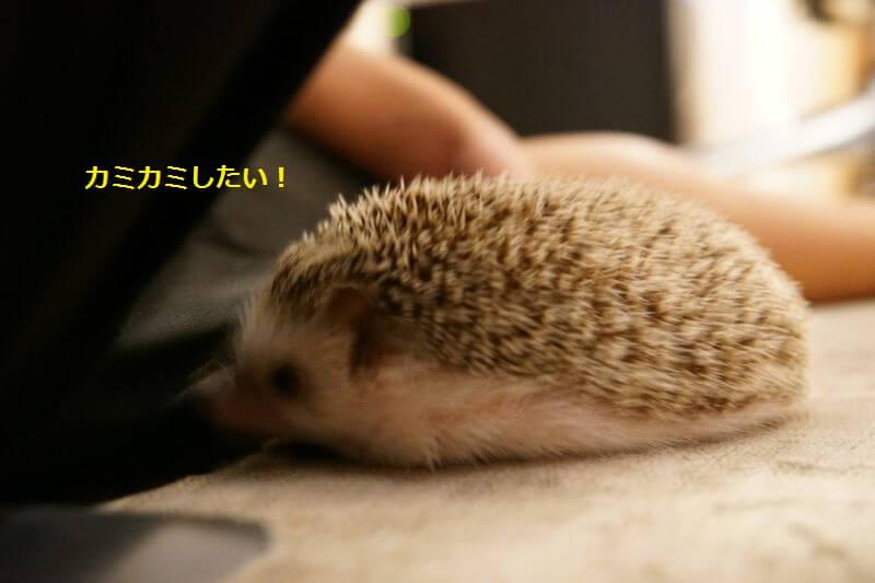f:id:chikojirou:20160925204330j:plain