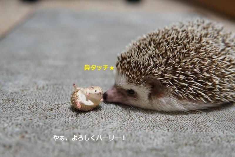 f:id:chikojirou:20160926214351j:plain