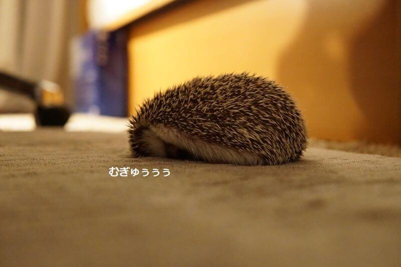 f:id:chikojirou:20160929212802j:plain