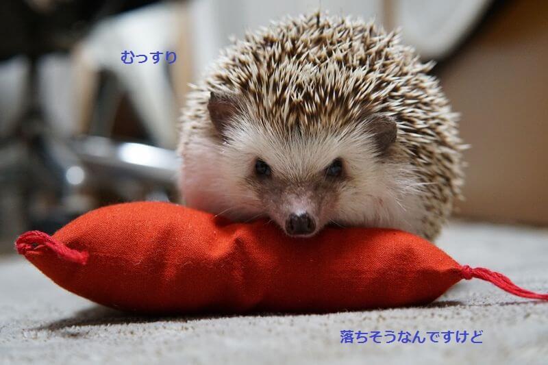 f:id:chikojirou:20161006213435j:plain