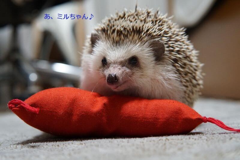 f:id:chikojirou:20161006213447j:plain