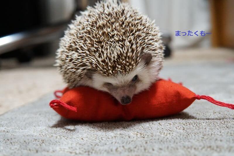f:id:chikojirou:20161006213512j:plain
