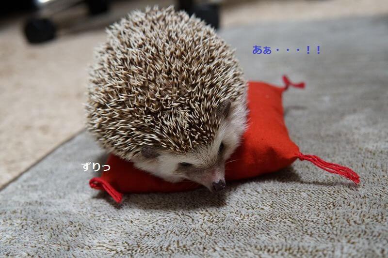 f:id:chikojirou:20161006213518j:plain