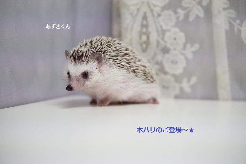 f:id:chikojirou:20161007211223j:plain