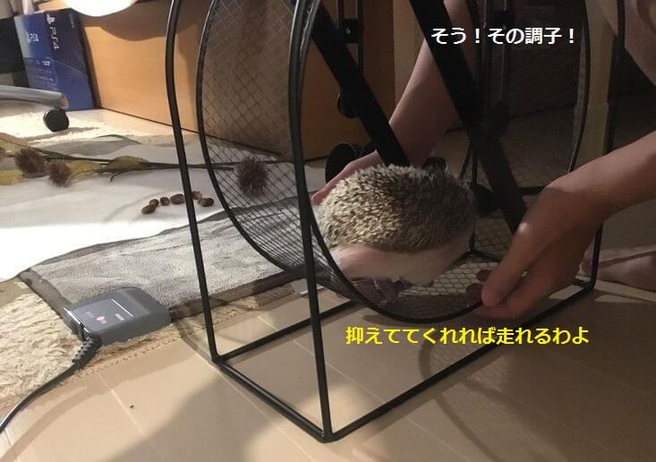 f:id:chikojirou:20161008145804j:plain
