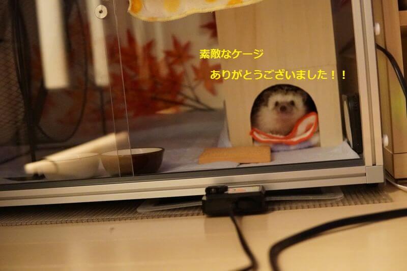 f:id:chikojirou:20161010215811j:plain