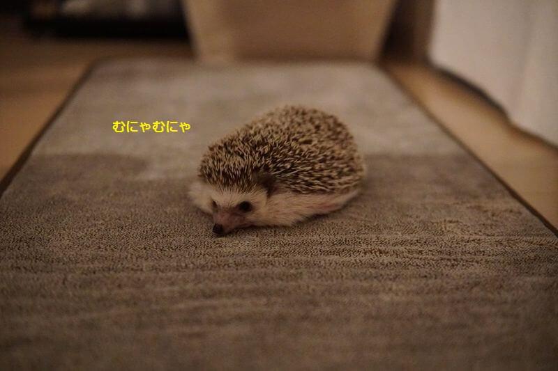 f:id:chikojirou:20161016195137j:plain